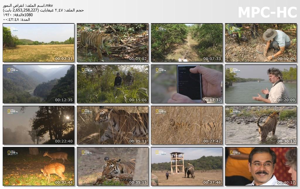 انقراض النمور counting tiger[مدبلج] [1080p] تحميل تورنت 8 arabp2p.com