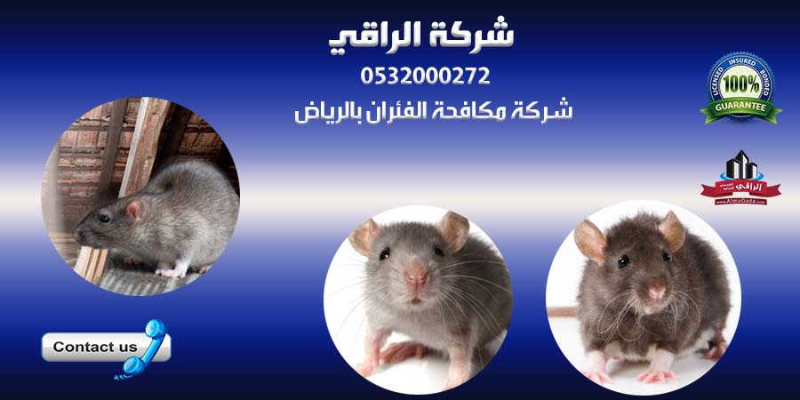 شركات مكافحة الفئران في الرياض 274403508